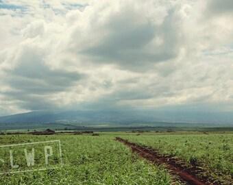 Morning Light, Road to Hana, Maui Hawaii Landscape, 8x12 10x15 12x18 16x24 Fine Art Photography Wall Art Home Decor