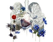 PRINT- The Tragedy of Zephyr and Anemone- botanical medical painting