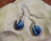 Cowrie Shell Earrings with Surgical Steel Hooks