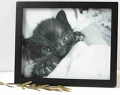 rescue kitten photo, black and white, animal charity, 3 sizes available, soft focus