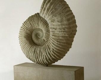 Ammonite Mantelliceras on Limestone