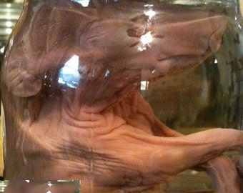 Classic Fetal Pig in a Jar - Preserved Wet Specimen Taxidermy