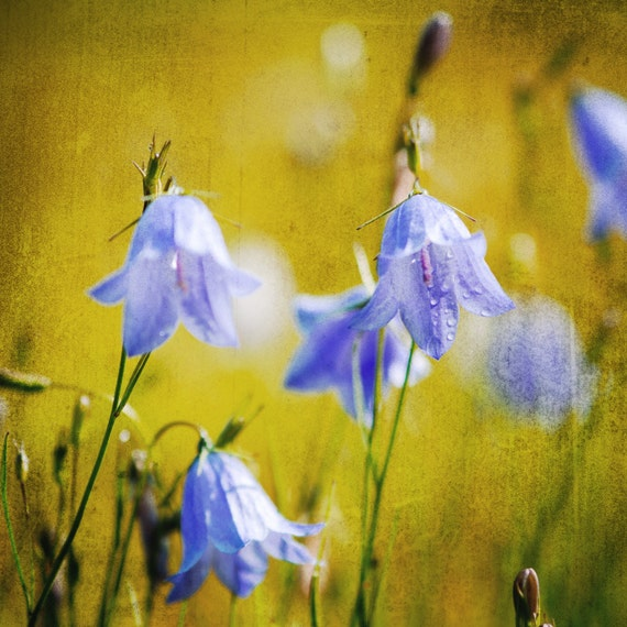 Blue Bells. Flowers. Nature Photography. Botanical Print by OneFrameStories.