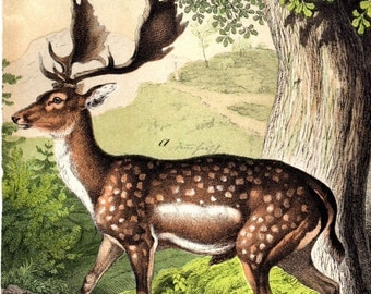 1877 Deer Stag Buck Antique Animal Print Matted Chromolithograph