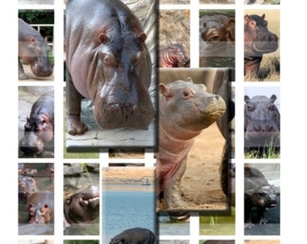 Hippopotamus Hippo Wild Zoo Animal African Digital Images Collage Sheet 1x2 inch Rectangles Domino Commercial INSTANT Download RD34