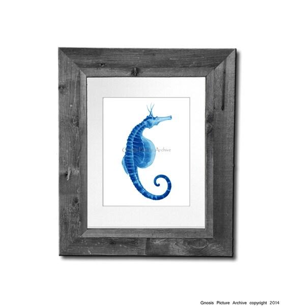 Etsy Coastal Wall Decor : Items similar to blue seahorse art print no coastal