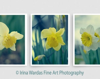 Teal wall art yellow daffodil photography set of 3 floral art prints, Narcissus flower tryptic art, green blue yellow 3 piece wall art decor