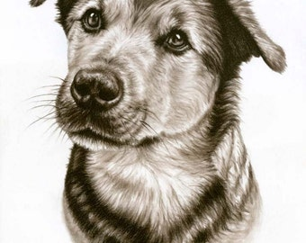 Dogs Eyes - Fine Art Print 30x40cm