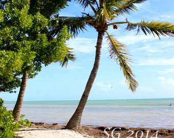 Key West Photography, Palm Trees