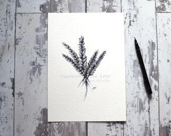 A4 Original Artwork, Lavender, Pen and Ink drawing, Illustration, Wall Art