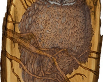 Great Grey Owl • #418 • Woodburned  Print
