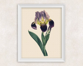 Iris Botanical Print - Purple Flower Art - 8x10 PRINT - Wall Art Prints - Antique Prints - Home Decor - Botanical Art Print -  Item #138