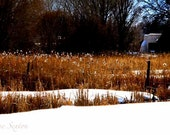 All Taos Wall Art Print - Field Golden Cattails snow-covered fields Old Adobe home New Mexico Santa fe style Fine Art Giclee photograph 6x12