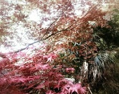 Maple Dreams- Pink Autumn, Japanese Print, Tree Leaves, Mood Photography, Nakasendo Way, Nature Scenery, Floral Abstract, Lyrical Nature Art
