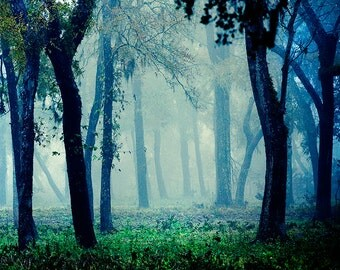 Fairytale - Foggy Woodland Photo - Magical Photography - Blue Mystical Forest - Decorative Print