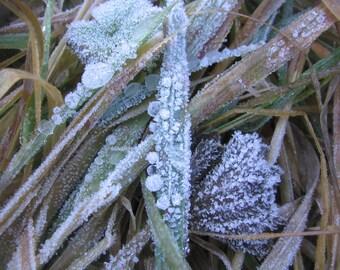 Frosty Droplets