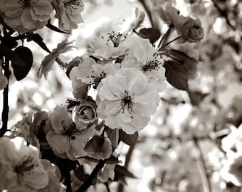 Fine Art Photography Flowers Nature Photography Black and White Square Format Archival Print