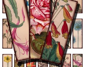 antique botanicals, microslide tile size, vintage printable digital collage sheet no. 453