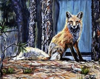 Fox ART glicee fox print, animal Wildlife artwork, art print ,woodland animals size and mat Option. Heather Sims