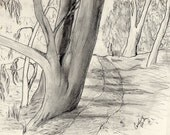 Ink and graphite pencil drawing Trail among Eucalyptus