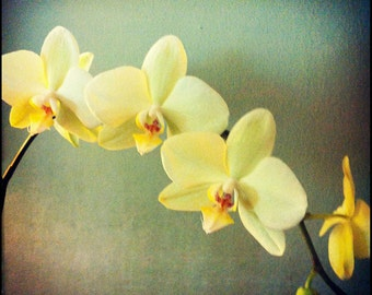 Yellow, Green, Blue Orchid Photograph--Orchids in Triplicate--Fine Art