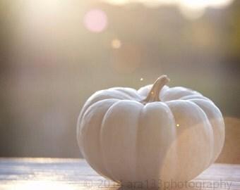 White Pumpkin Fall Photo Autumn Picture Home Decor Late Summer Harvest Neutral Beige - 5x5 Fine Art Photography Print - October Dusk