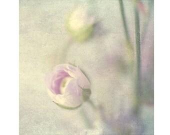 Flower Photography, Flower Macro Photo, Floral Art Print, Shabby Chic Decor. Pastel Decor