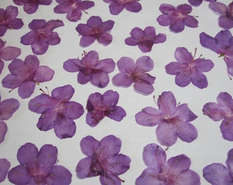Natural Dried Pressed Flowers for Crafting - pink azaleas