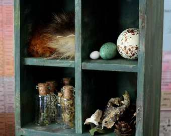 Cascadian Forest Collection - cabinet of curiosities featuring natural specimens plus companion booklet FREE SHIPPING