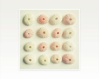 Sea Urchin Art, Nature Photography, Sea Shell Art, Neutral Home Decor, Pink and Cream, Bathroom Art - Sea Urchin Collection
