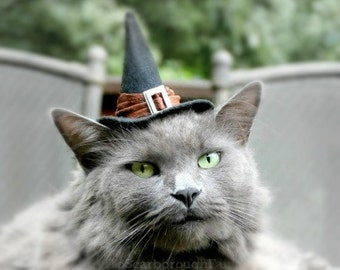 Cat Costume - Witch Hat - Good Witch - Cat Halloween Costume - Pet Halloween Costume
