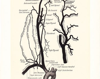1899 Human Anatomy Print - Circulation Subclavian Carotid Arteries - Vintage Antique Medical Anatomy Art Illustration Doctor Hospital Office