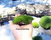 Preserved Moss-Pillow Moss-Cushion Moss-NO WATER needed-Now by the PIECE-Fairy Garden Moss-Wedding Moss