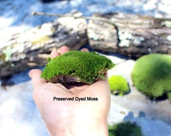 Preserved Moss-Pillow Moss-Cushion Moss-Quart bag-NO WATER needed-Fairy Garden Moss-Wedding Moss