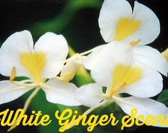 WHITE GiNGER SCENTED Soy Wax Melts - Soy Wax Tarts - Soy Wax Candle - Break Away Melts - Hand Poured - Highly Scented - Handmade In USA