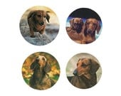 Dachshund  Magnets:  4 Cool Doxies for your home, your collection,  or to give as a unique gift