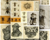 Bees and Beekeeping Vintage Illustrations Digital Collage Sheet Large Images Printable Download