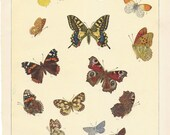 Set Of Four 1929 Vintage Color Butterfly Lithographs - Lepidoptera - Moths - Antique Illustration