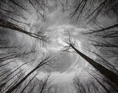 SEEKER'S QUEST Original  Art  Nature Sky Trees Photograph