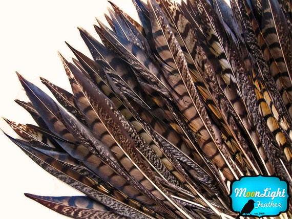 Long Feathers 10 Pieces 14 16 Quot Natural Lady Amherst