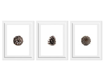 Pinecone Collection 8x10. Fine Art Natural Print. Minimal. Natural Home Decor. Indoor garden botanical