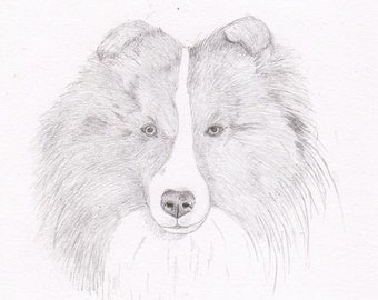 Sheltie Signed Personalized Original Pencil Drawing Double Matted Print -Free Shipping- Desert Impressions