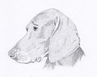 Weimaraner Signed Personalized Original Pencil Drawing Double Matted Print -Free Shipping- Desert Impressions