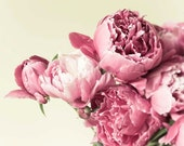 Pink Peony Print, Pastel Rose, Peonies Photograph, Shabby Chic, Yellow, Baby Girl Nursery Decor, Large Wall Art