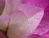 Flower Wall Art, Nature Print, Botanical Print, Fine Art Photography, Art Prints, Garden Art, Flower Art, Pink Flower Print, Girls Room