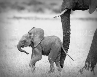 50% OFF SALE,  Baby Elephant  Black and White Photo Print, African Safari, Baby Animals,  African Wildlife Photography, Nursery Wall Art