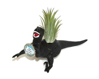 Black dinosaur planter. Dave the Deinonychus comes complete with air plant.