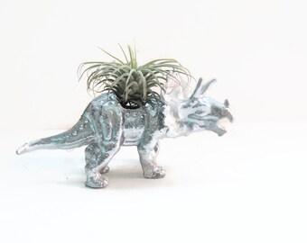 Tara the triceratops. Small silver dinosaur planter with mini air plant.