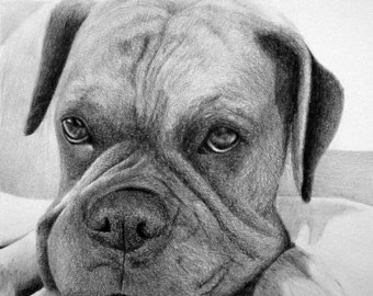 Custom Pet Portrait From Your Photo - 8x10 Original Cat Dog Horse Pencil Sketch Art Drawing From Picture