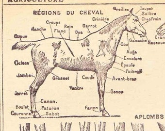 Antique French Print Dictionary Page 1920s Engraved iIlustrations XRAY Horse anatomy equestrian paper projects scrapbooking, collage